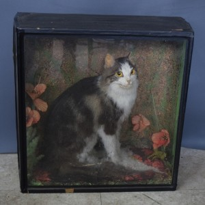 Vintage Taxidermy - Stuffed Creepy Cat